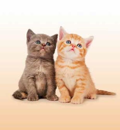 Boutie Cats de EDREXA