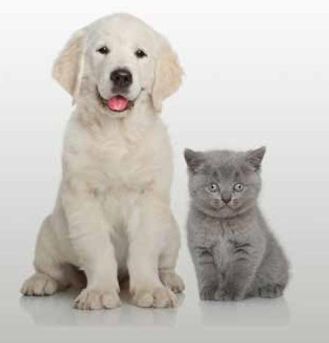 Edredón ajustable Pets de EDREXA